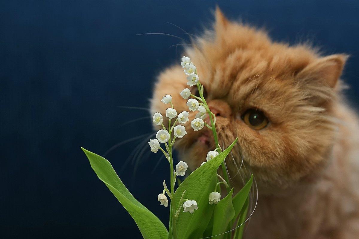 Открытка кот весна, привет для