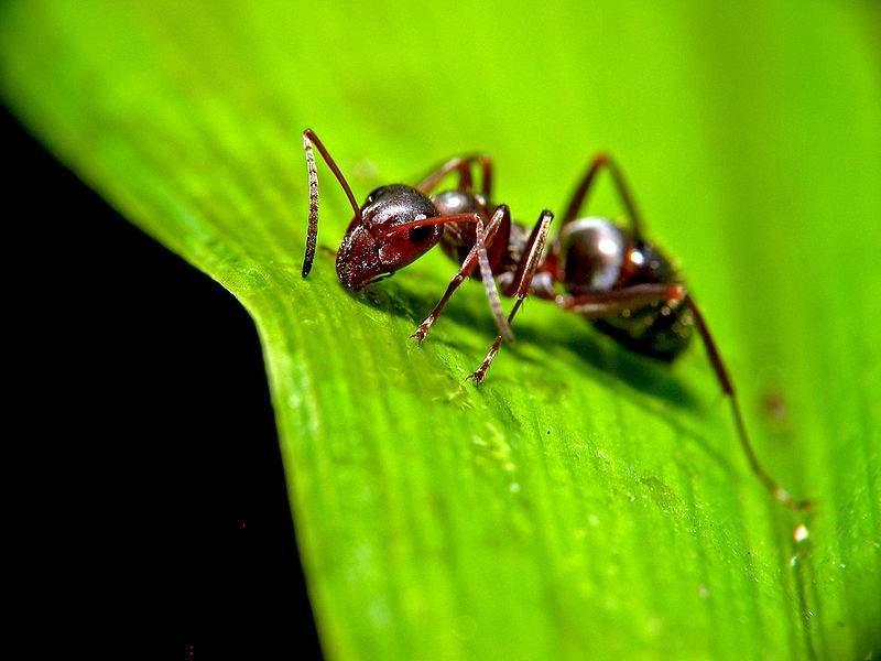 Рисунки, картинки для муравьев