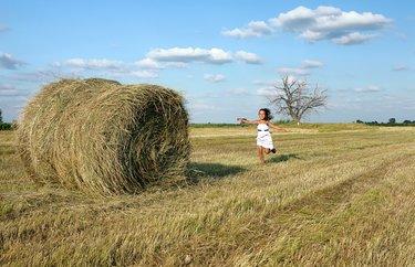 отпусти меня трава картинка сибирских
