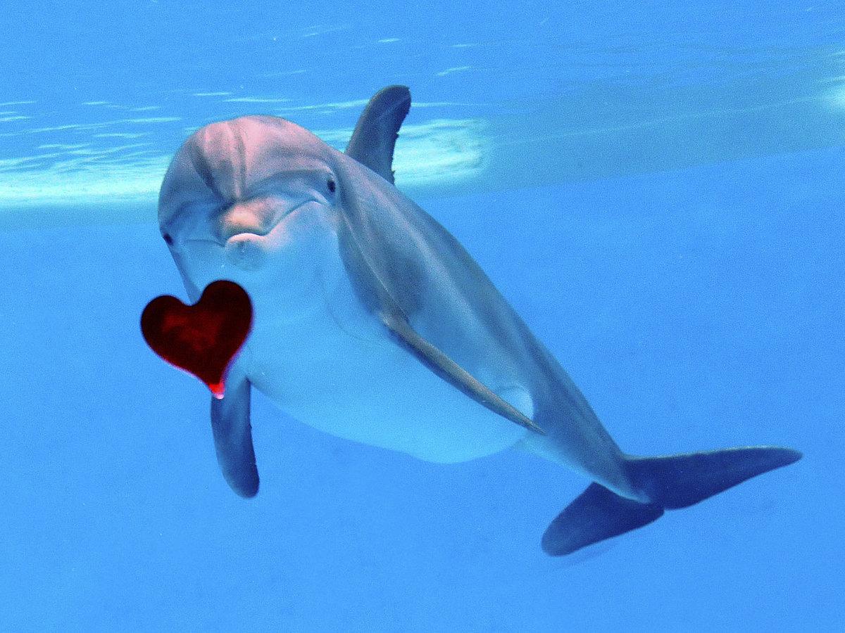 дельфины картинки ассоциации качестве наличников для