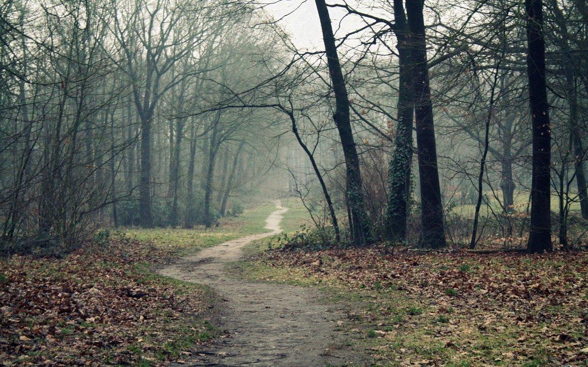«фотографии природы поздняя осень в лесу в осенних тонах ...