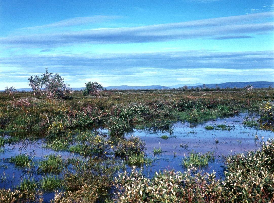 картинка болота в тундре условий