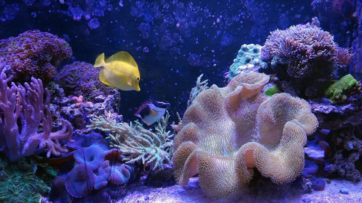 Фото морских обитателей теплых морей