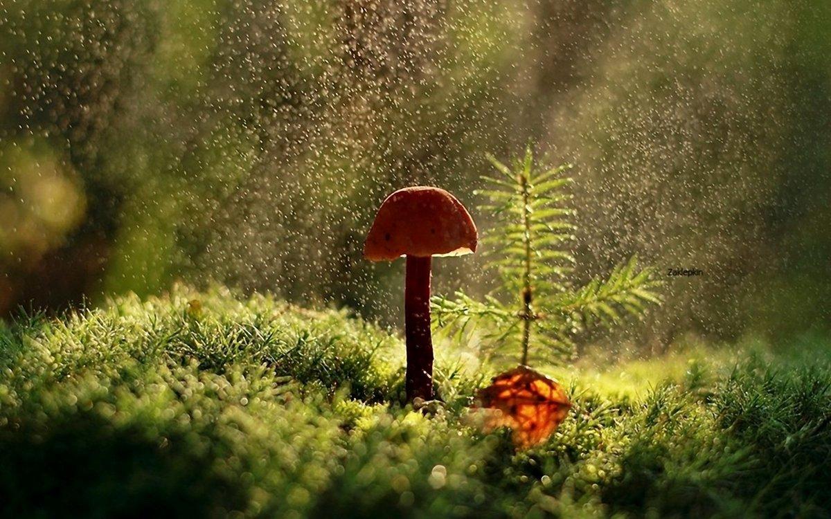 это одна картинки идет дождь в лесу китай