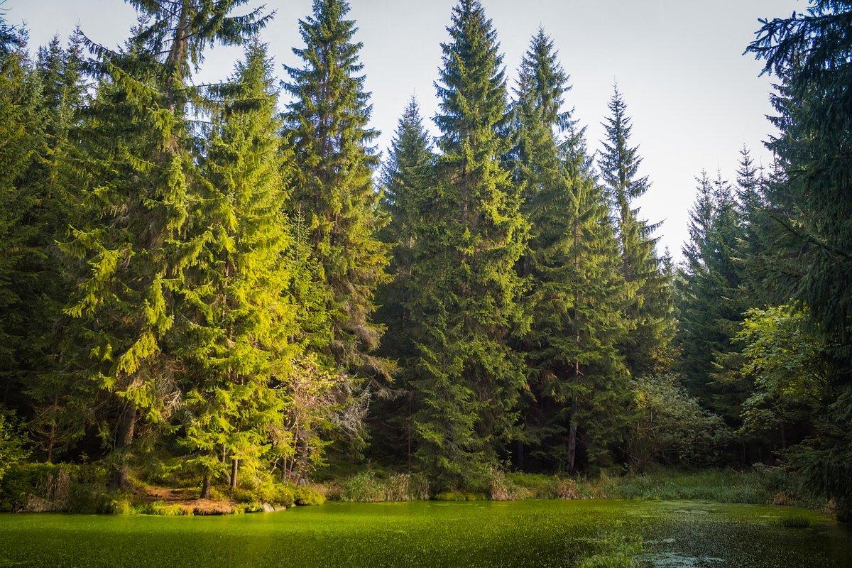 Леса россии в картинках