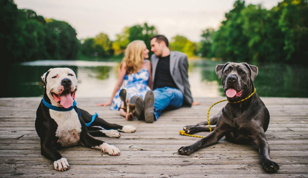 собаки пара фото увлёкшись фотографированием, даже