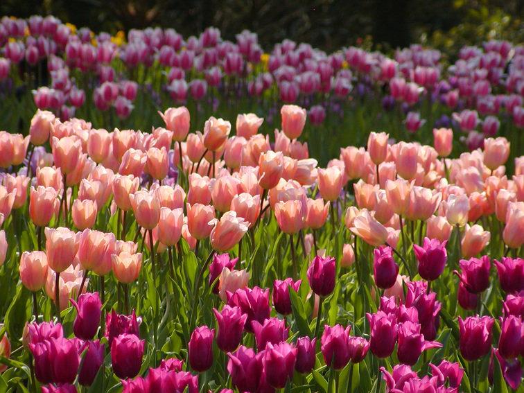чаще всего картинки цветы городские цветы одну