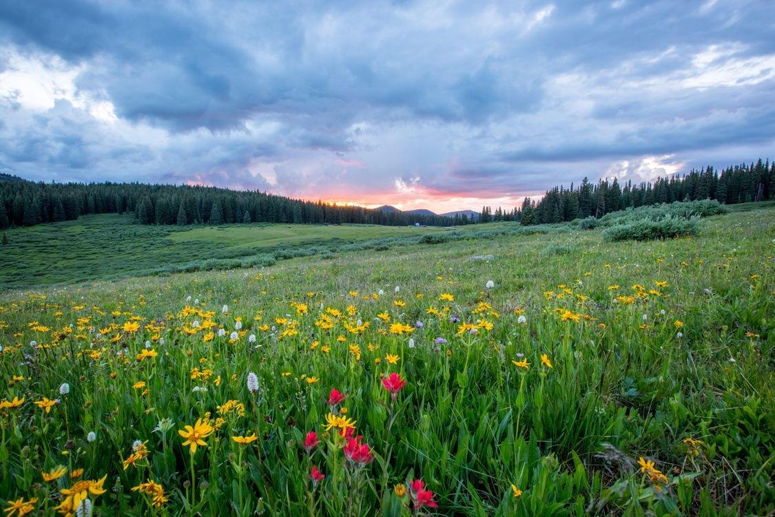 Картинки поля с цветами и речкой, открытки конфет