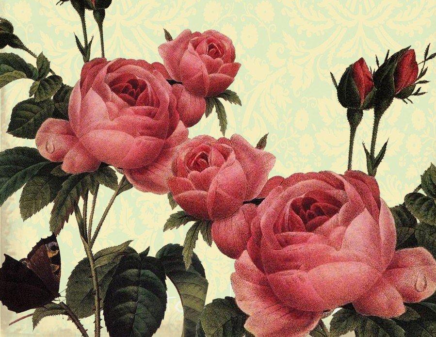 Картинки винтажных роз