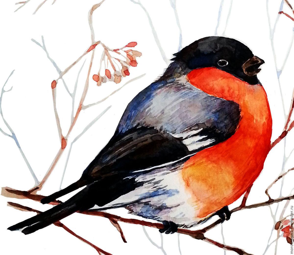 Птицы на картинках для детей