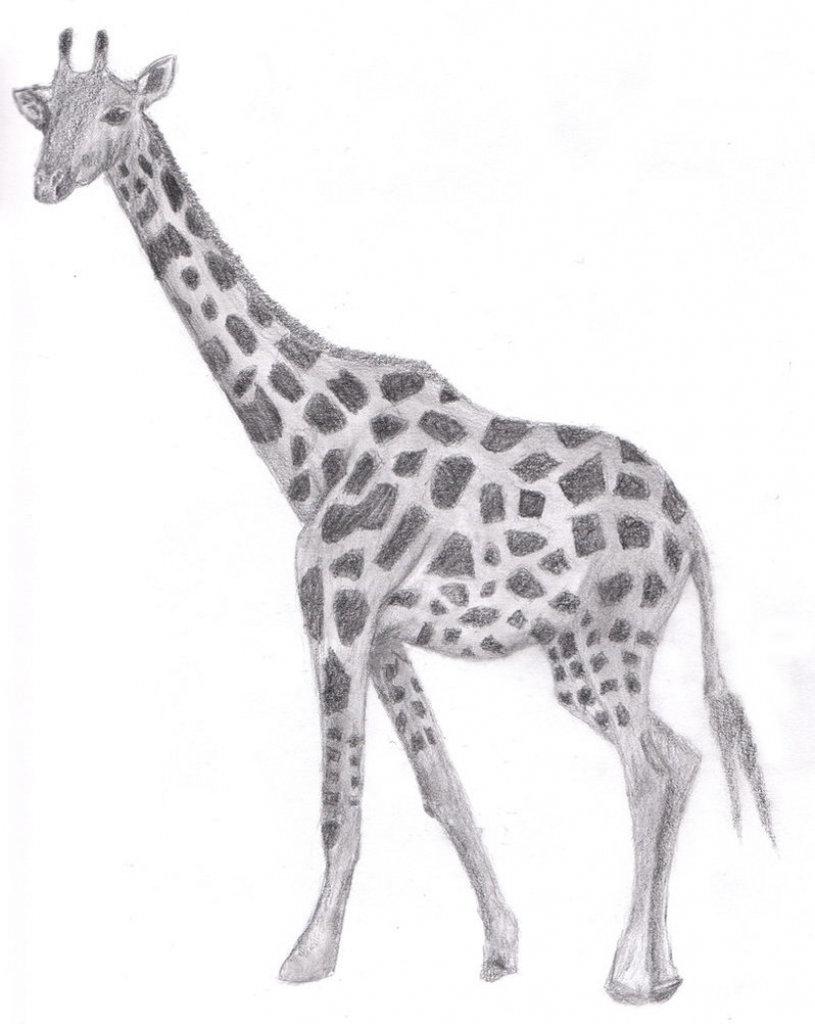 Вике, картинка жирафа для срисовки