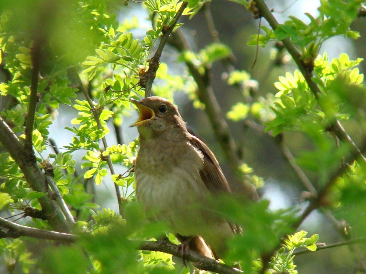 общем-то, фото какие птицы поют вечером в лесу разработана