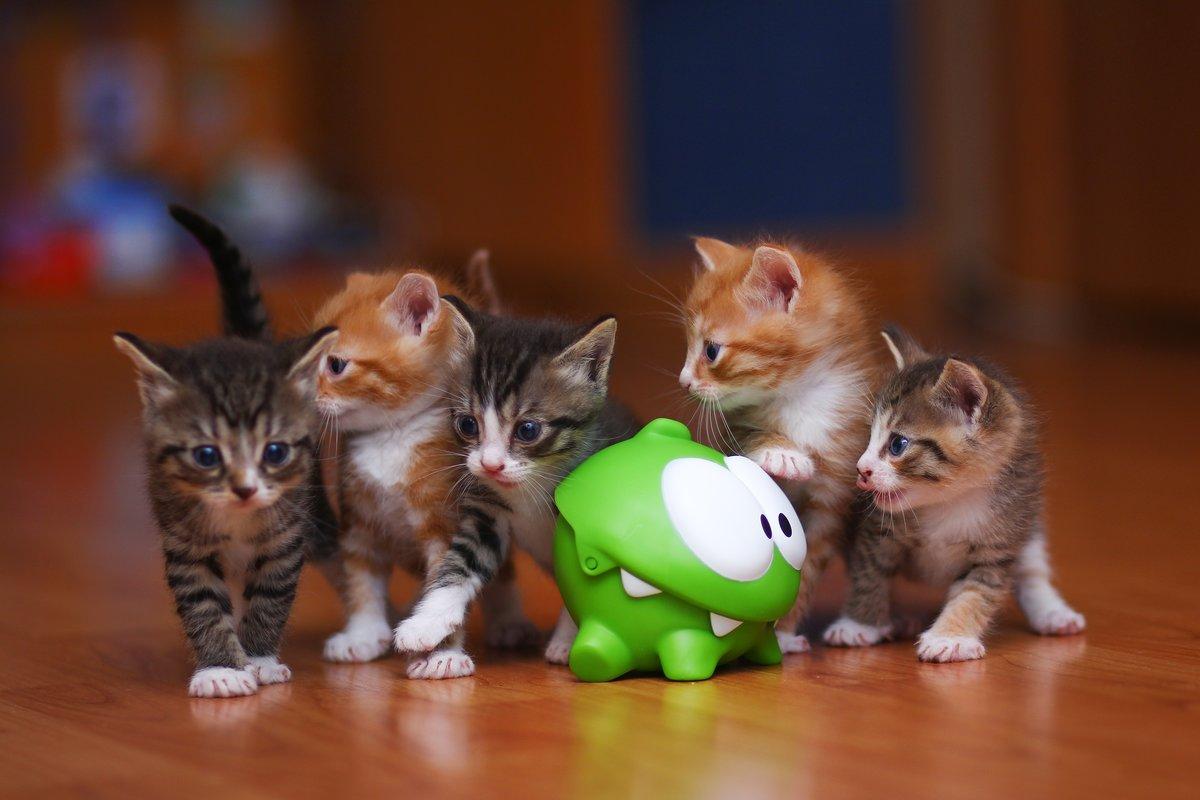 Прикольные, видео про котят картинки