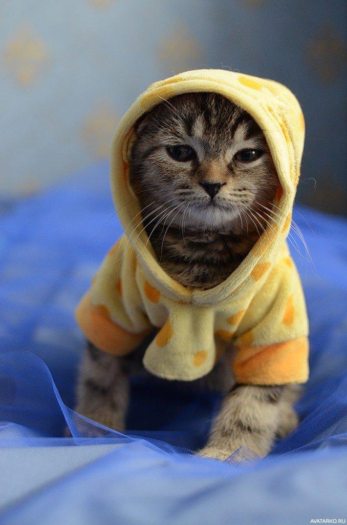 Морю, прикольная картинка кота на аву