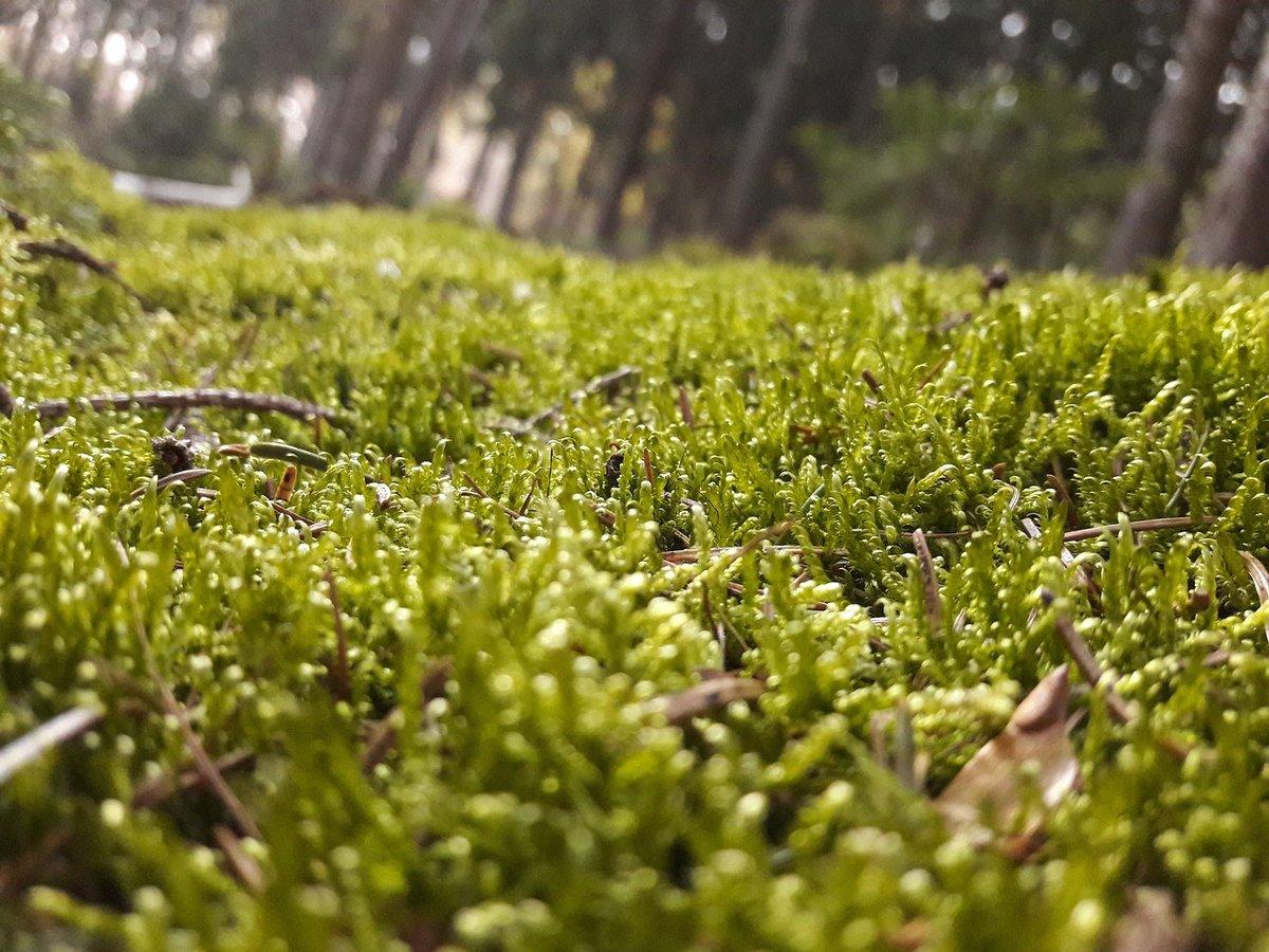 левой фото и описание мхов в сосновых лесах товары для интерьера