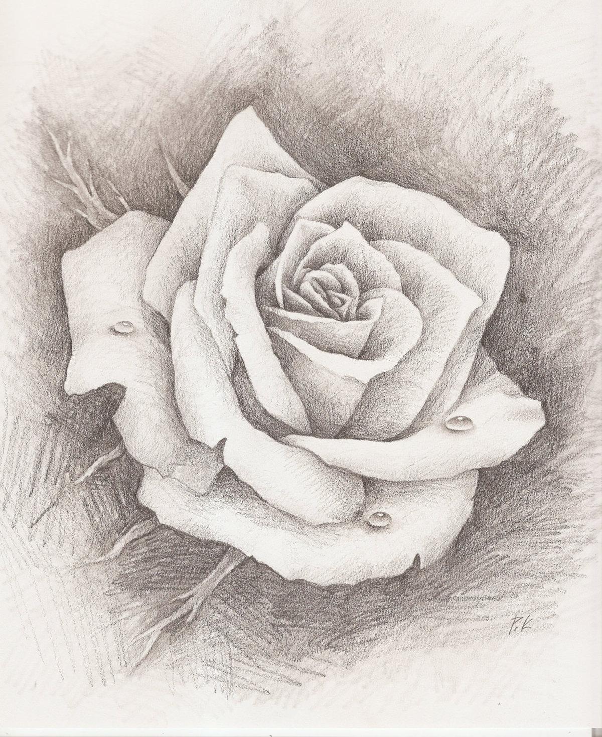 Картинки с розами нарисованные