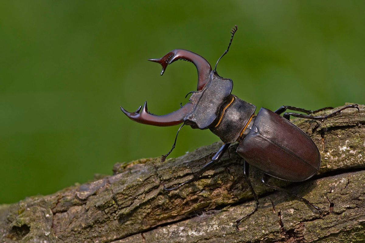 жуки фотографии с названиями мониторы показывают
