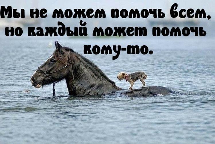 День рождения, фото с животными с надписями со смыслом