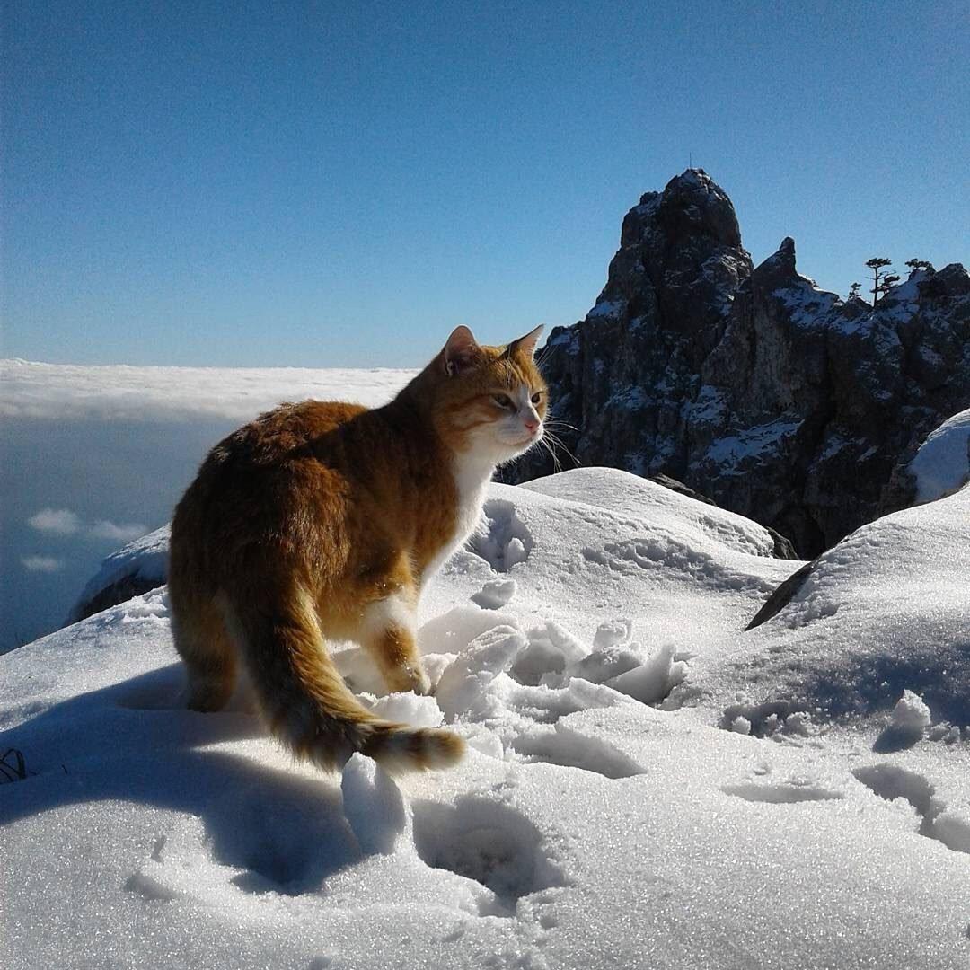 картинки с котами в горах ювелирных украшениях аксессуарах