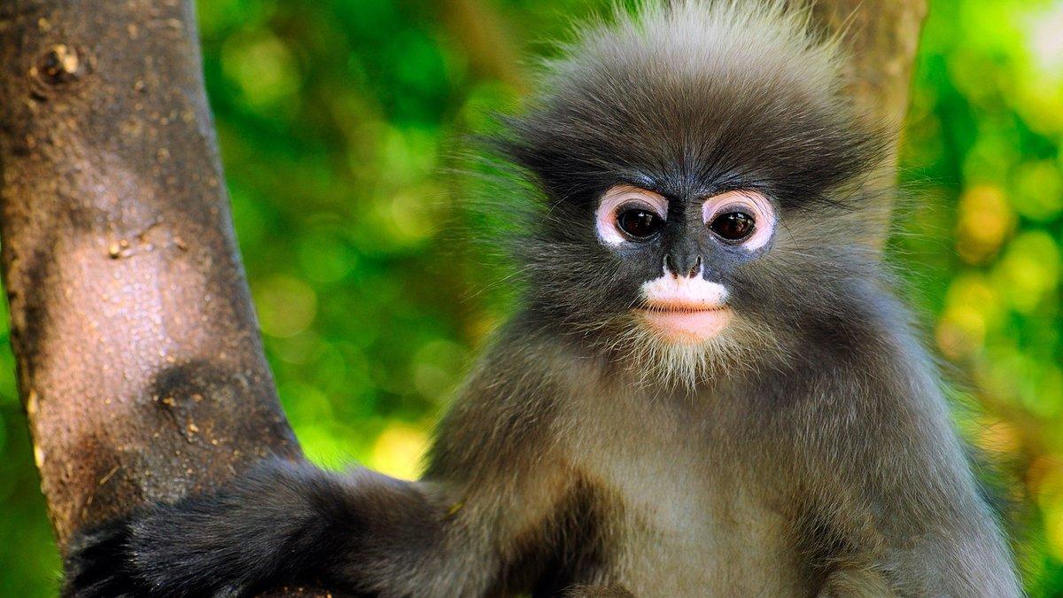 картинка обезьянка в мире восходящие раки