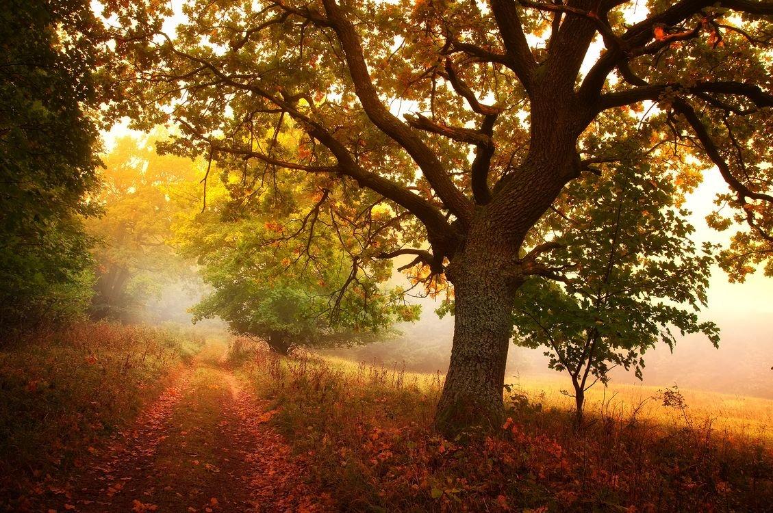 Пейзаж с деревом и туманом.