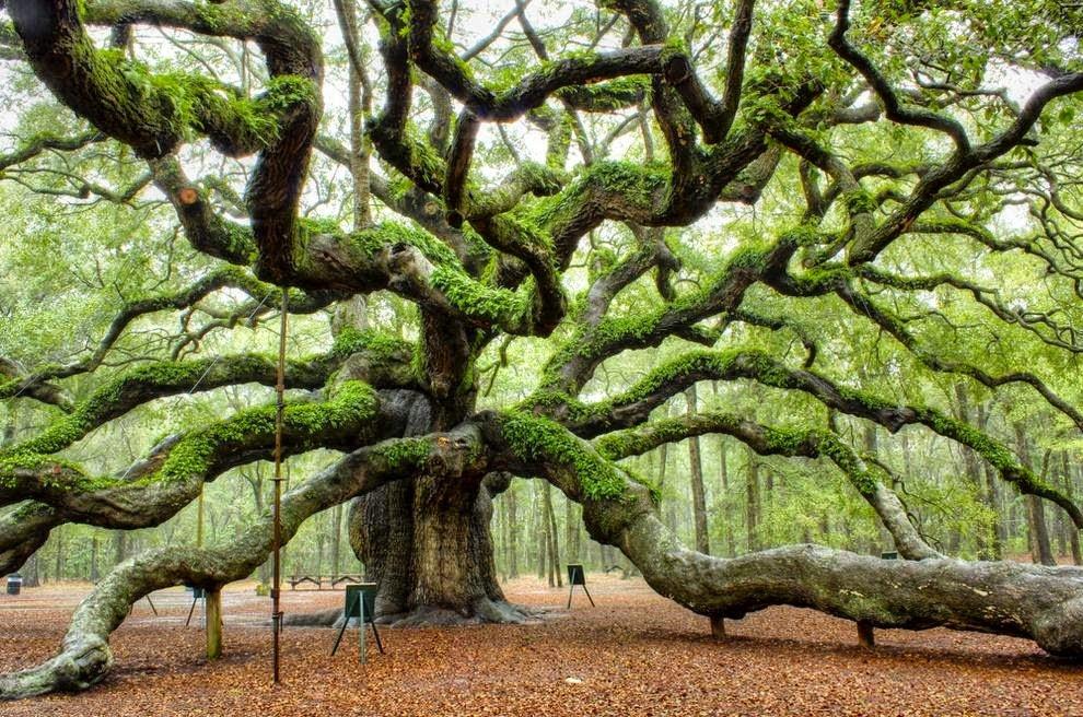 странное дерево фото фото обозначены