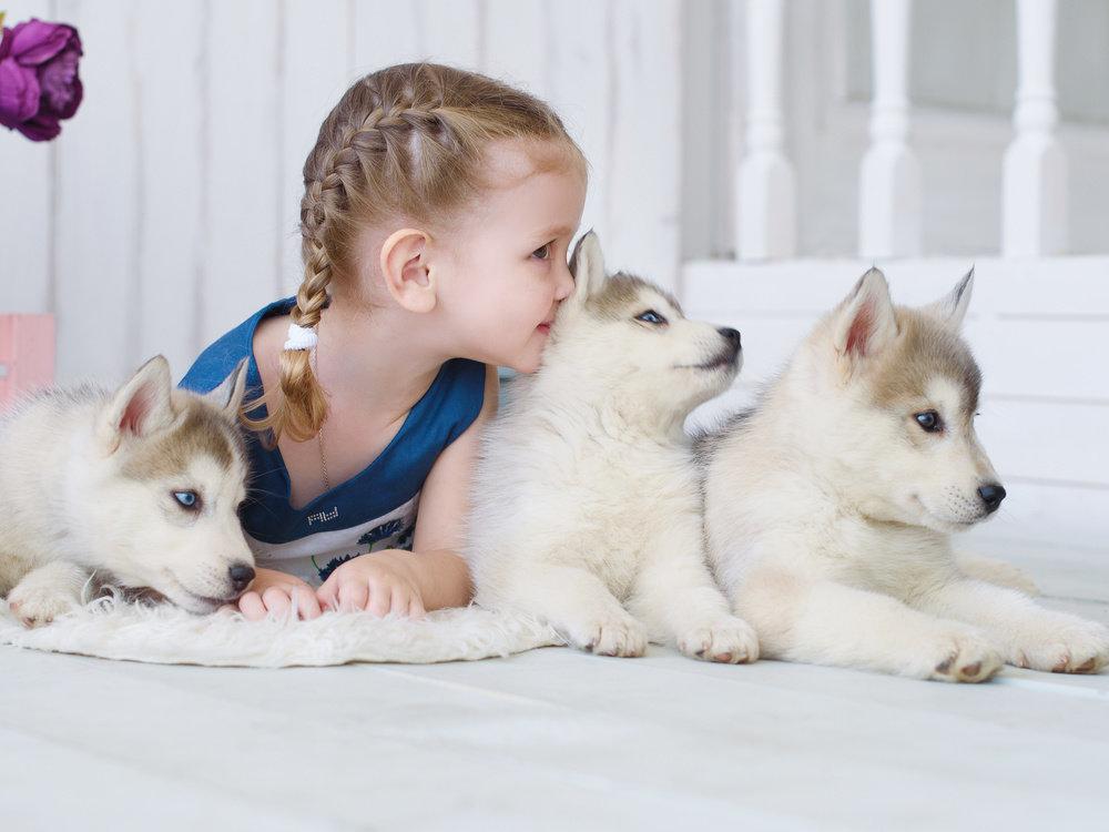 фото с щенками хаски и малышом годовалым раздел посвящен земельным