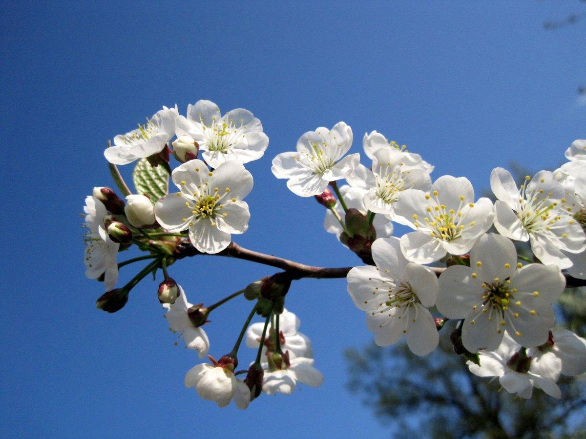 Днем домовых, время года весна картинки
