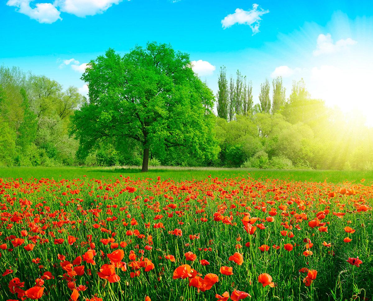 Картинки природы лето