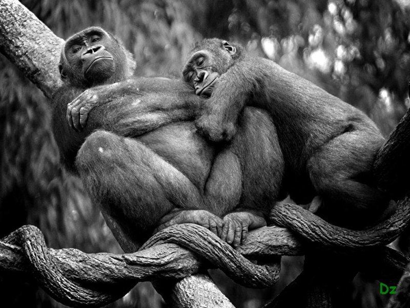 Прикольные картинки демотиваторы с животными
