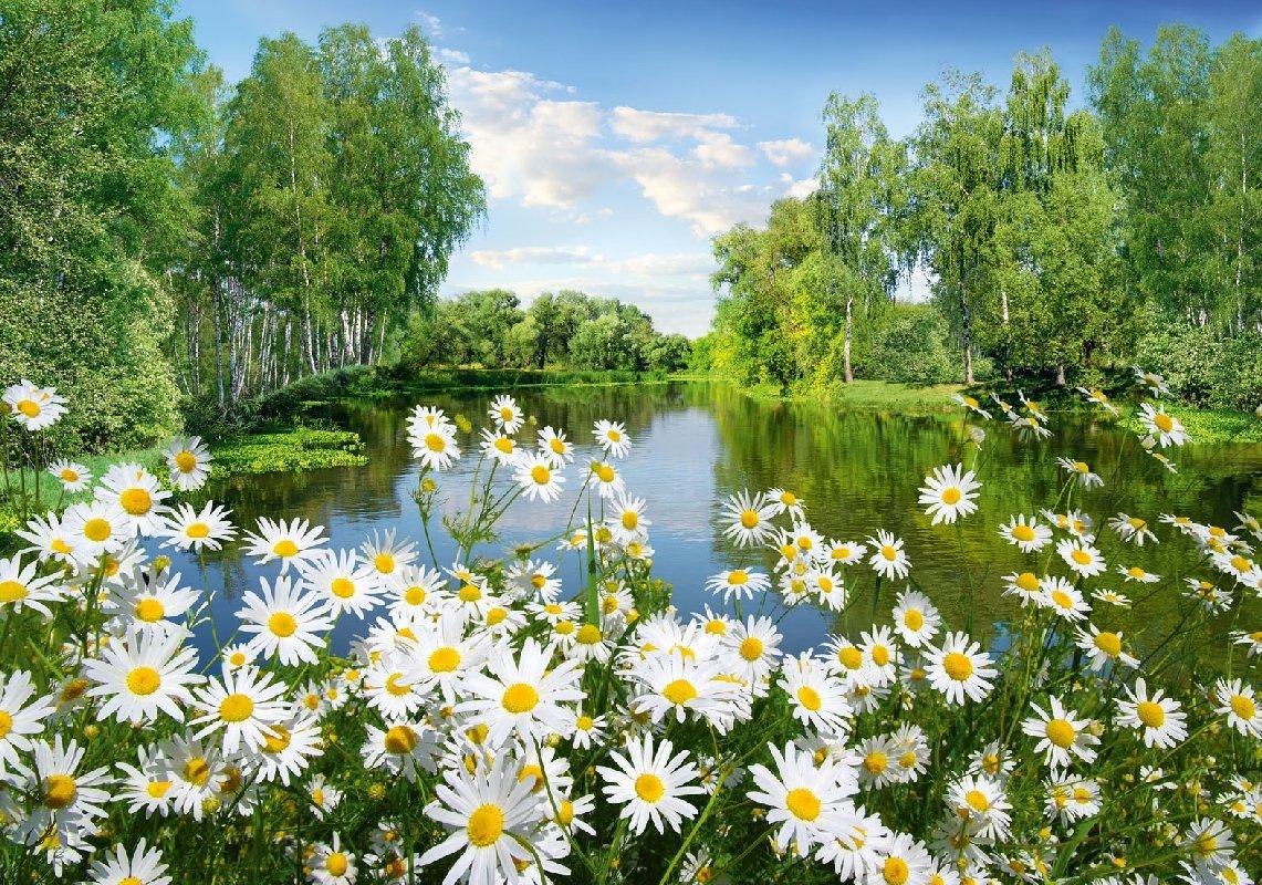 Открытка красивая природа реки