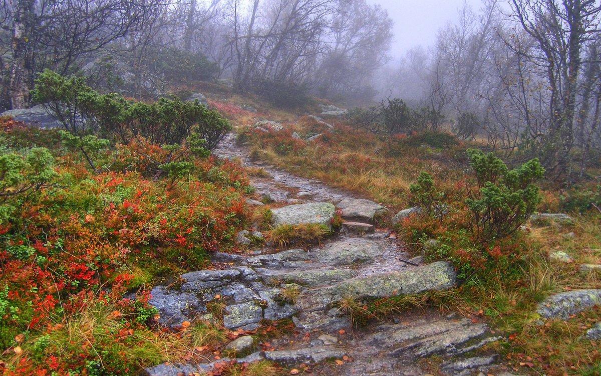 Осенней пасмурной порою