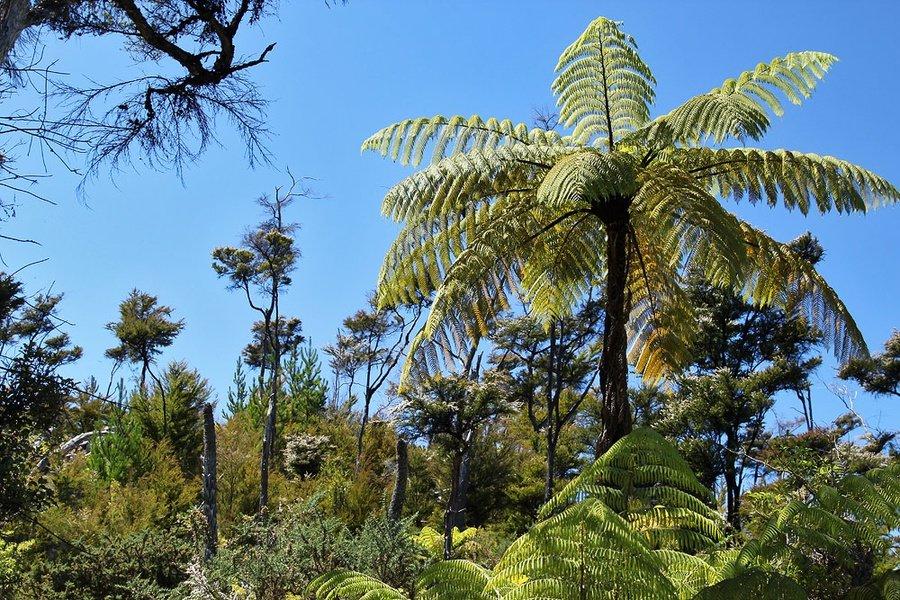 любите фото папоротники пальмы кто делал