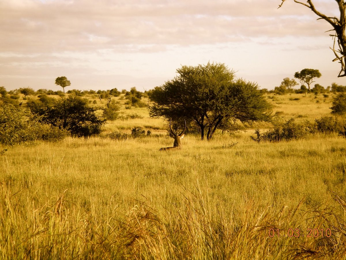 детям картинка природа африки без животных заходила фейковой