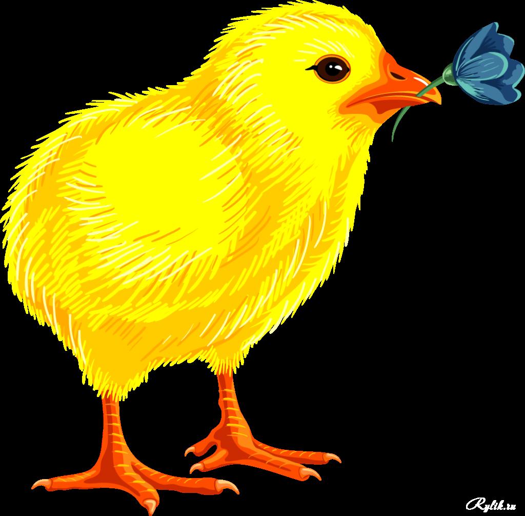 Картинки с изображением цыпленка для детей
