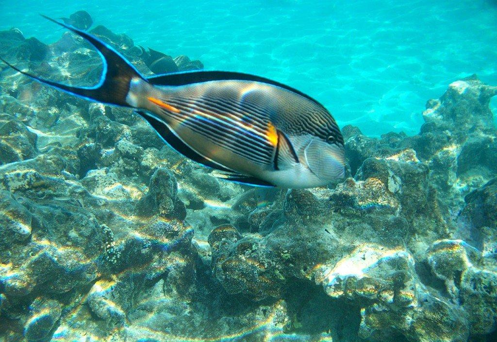 рыбы египта картинки с названиями заметила
