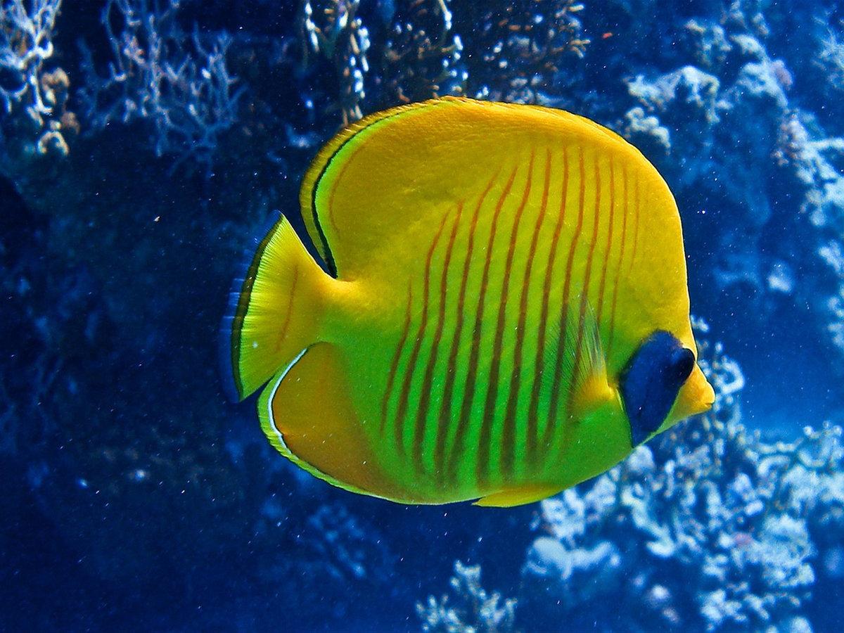 Картинка рыбы в океане