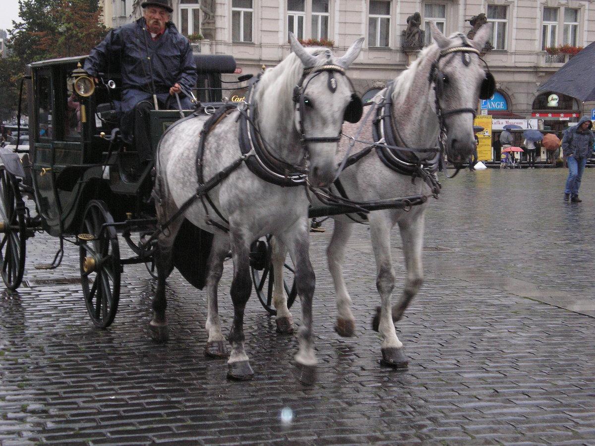 бричка для лошади картинки