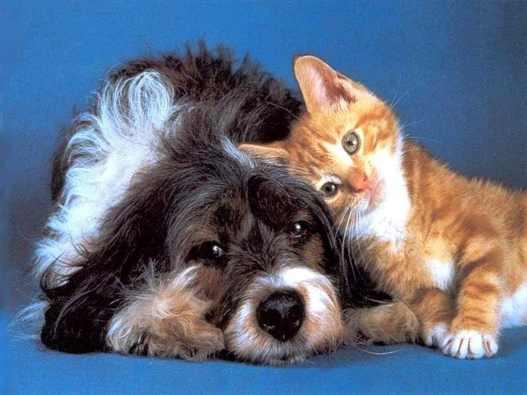 Прикольные картинки с собачками с надписями о любви