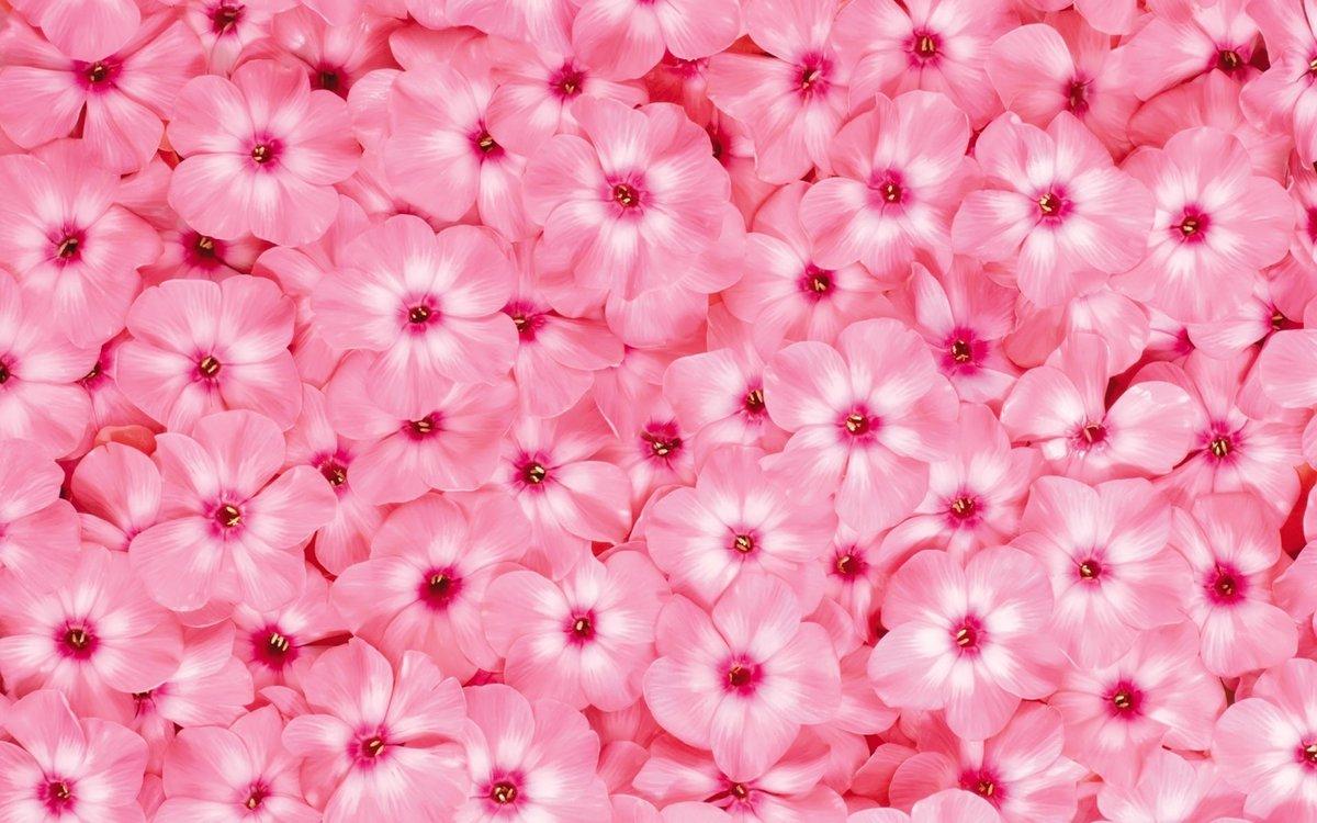Картинки розового цвета красивые