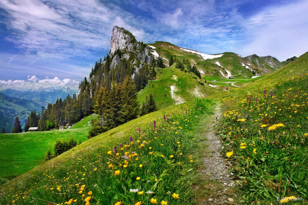 Фото Альпийские луга Швейцарии