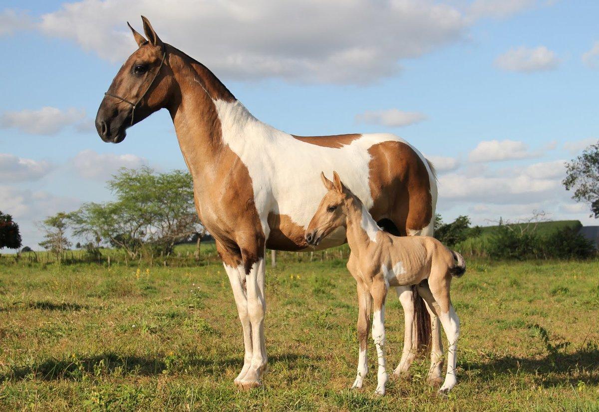 Картинки коней всех разновидностей