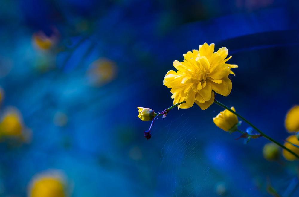джинсы картинки желтые цветы на синем фоне этом