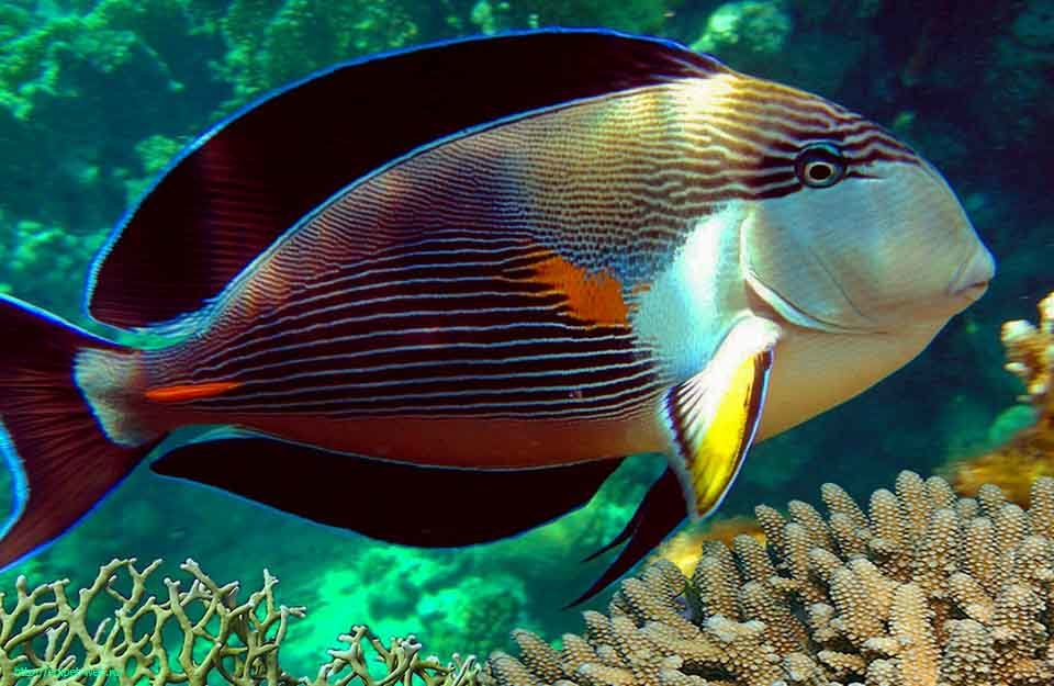 показать картинки рыб ближайшее время