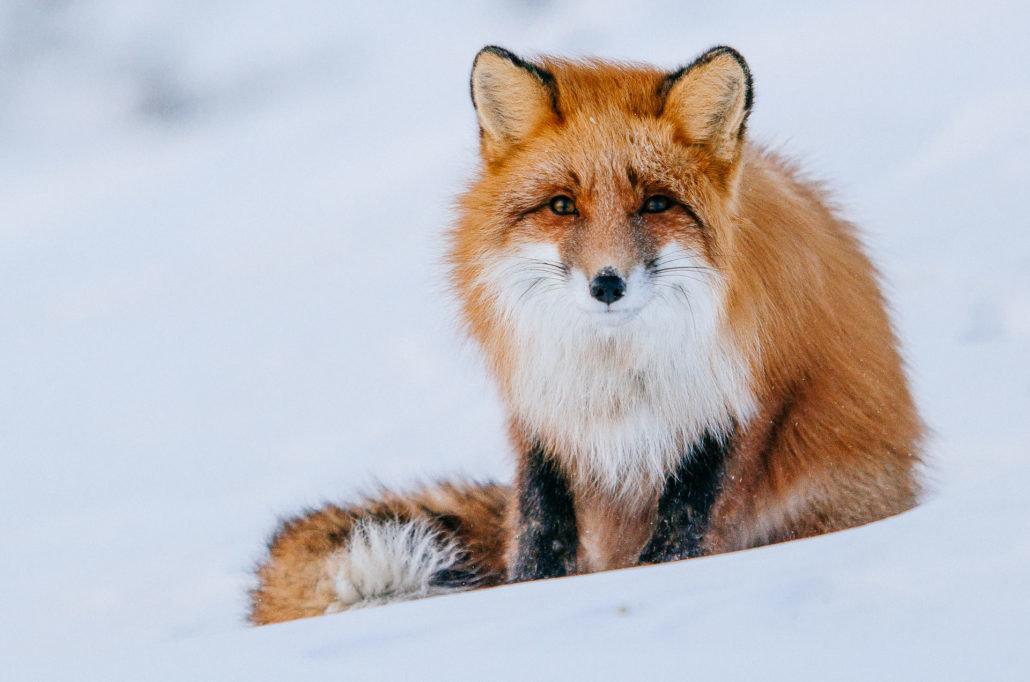 изучим диких тварин картинки нашей