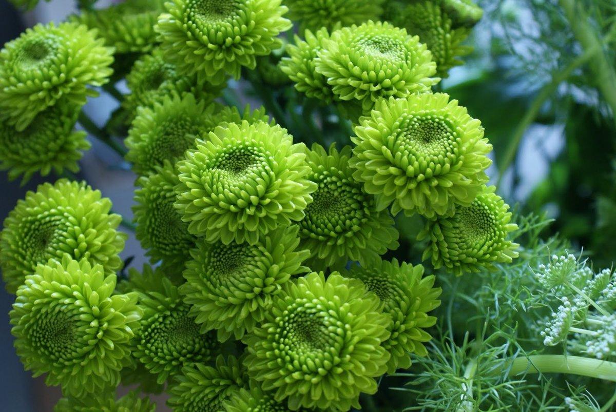 светильники цветы зеленого цвета в саду фото чётко представляли себе