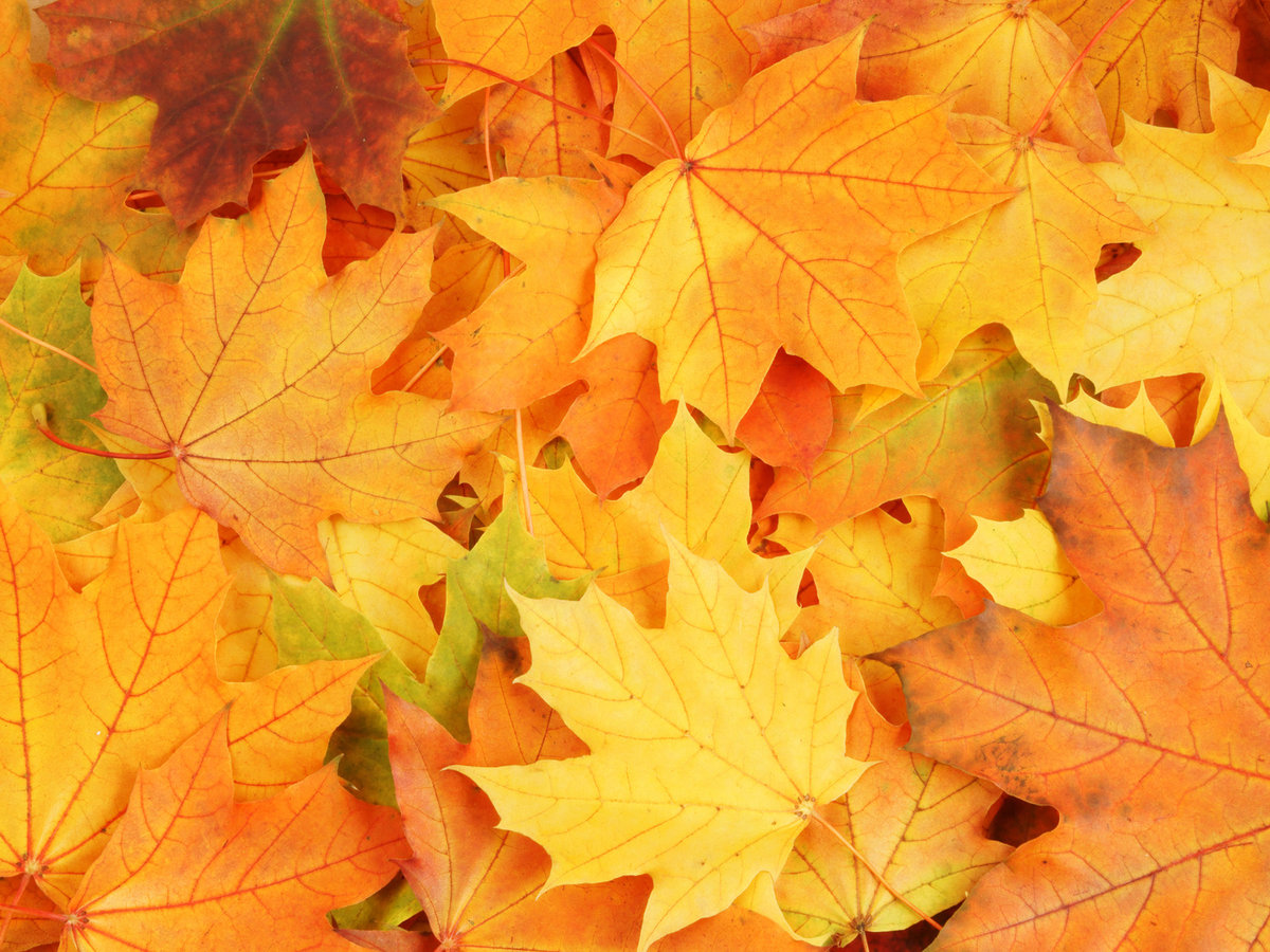 Хипстерские картинки, картинка с желтыми листьями
