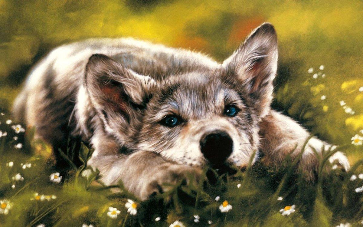 Животные на картинках рисованные