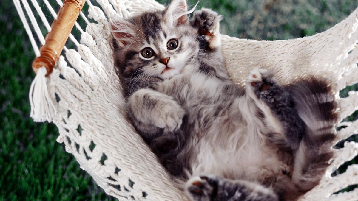 Смешные картинки коты на рабочий стол, картинки для