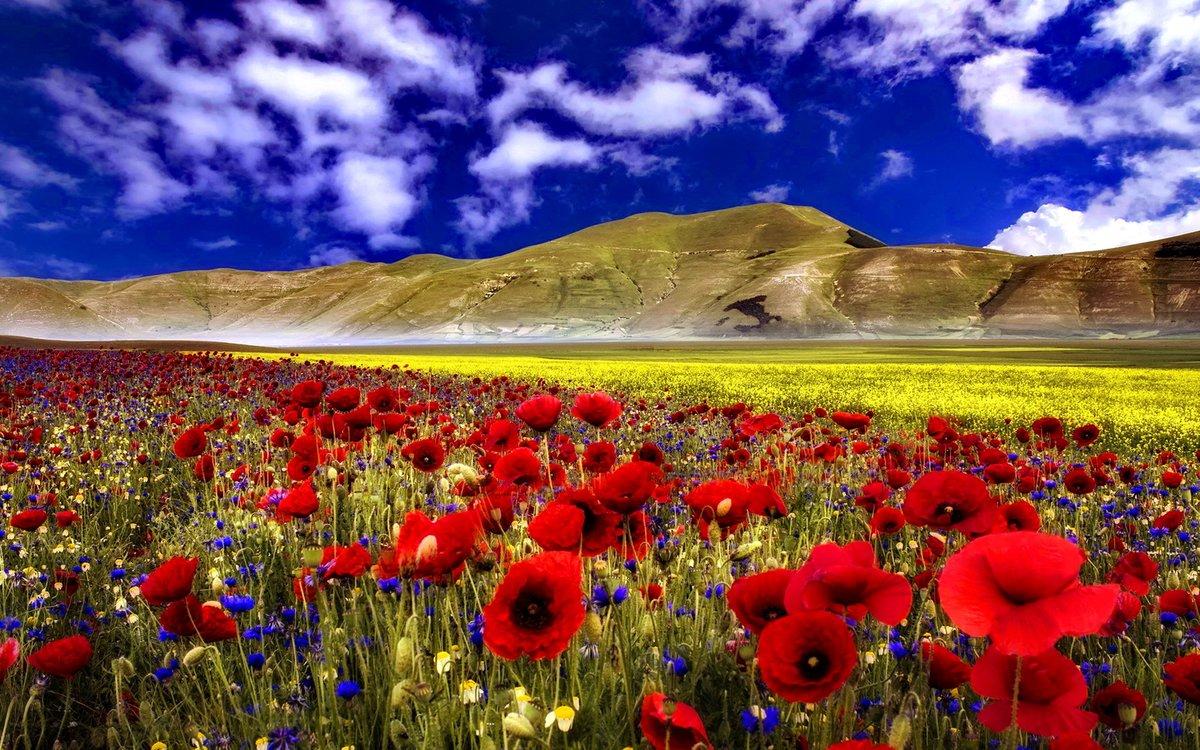 картинка поле цветов и горы подарков торжестве